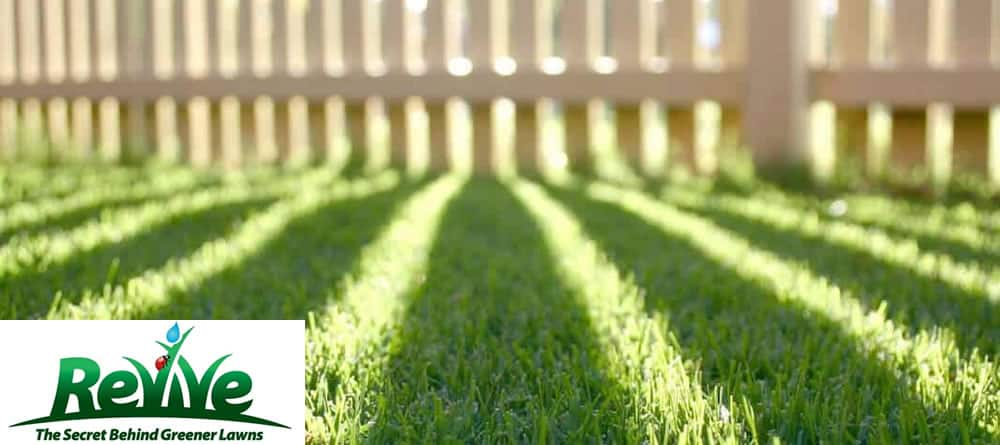 Revive lawn care – the secret behind greener lawns