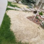 Common Lawn Disease Problems in Spring