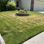 Heat & Drought Stress: Will My Lawn Recover?